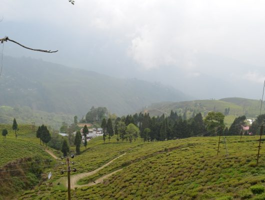 Happy Valley Tea Estate in Darjeeling on an India Tour
