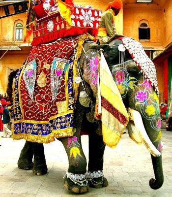 Jaipur Elephant on a Golden Triangle India Tour
