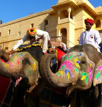 Elephants in Jaipur on a Golden Triangle India Tour