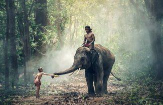 Elephant India Tour
