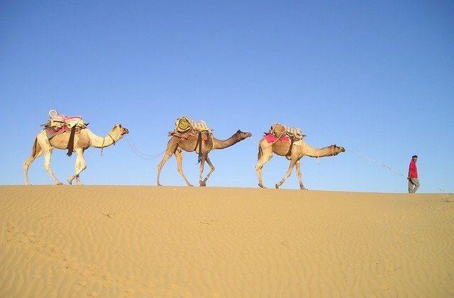 Cheap India Flights - Camel