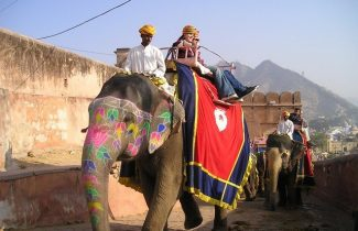 Cheap India Flights - Elephants