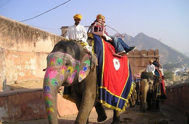 Cheap India Flights - Elephants
