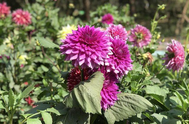India Tour - New Delhi - Lodhi Garden - Flowers