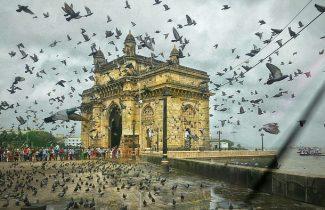 India Tour - Bombay - Gateway of India - Birds